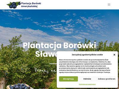 Plantacjaborowki.eu sprzedaż borówki